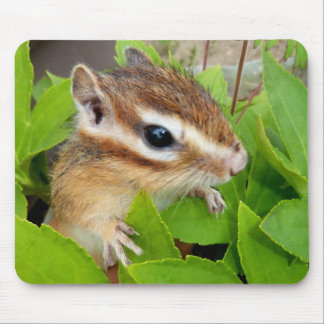 Chipmunk photo (20-1) mouse pad