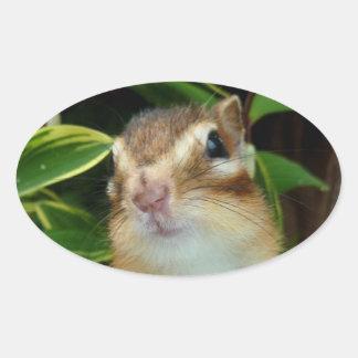 Chipmunk photo (20-2) oval sticker