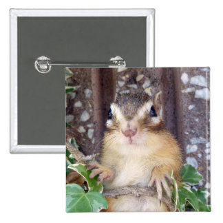 Chipmunk photo (20-3) button
