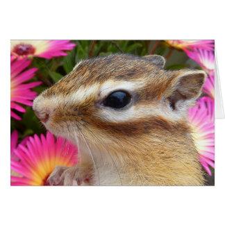 Chipmunk photo (30-13) card