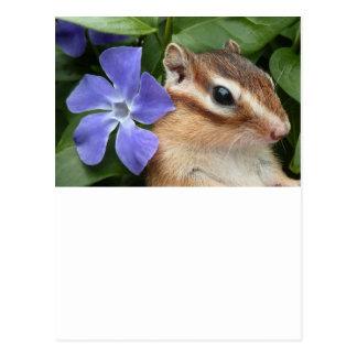 Chipmunk photo (30-14) postcard
