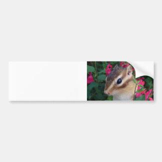 Chipmunk photo (30-16) bumper sticker