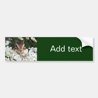 Chipmunk photo (30-19) bumper sticker
