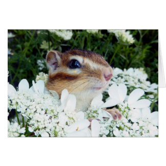 Chipmunk photo (30-19) card