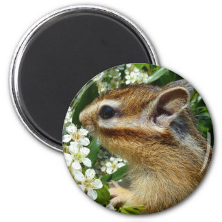 Chipmunk photo (30-19) magnet