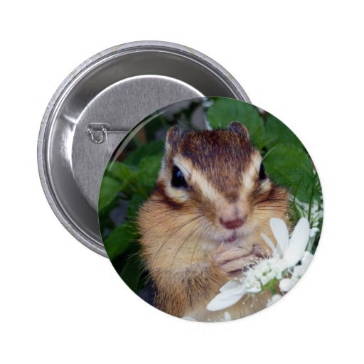 Chipmunk photo (30-19) pinback button