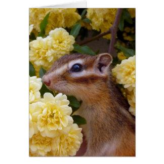 Chipmunk photo (30-1) card