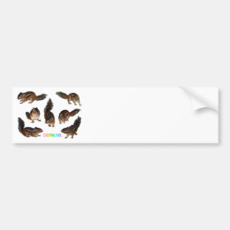 Chipmunk photo (31) bumper sticker