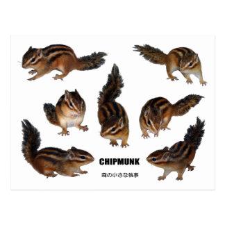 Chipmunk photo (31) postcard