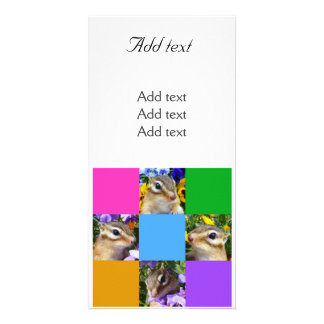 Chipmunk photo (32) card