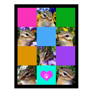 Chipmunk photo (32) postcard
