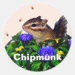 Chipmunk photo (4) type1