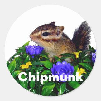 Chipmunk photo (4) type1 classic round sticker
