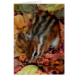 Chipmunk (photo), Autumn Card