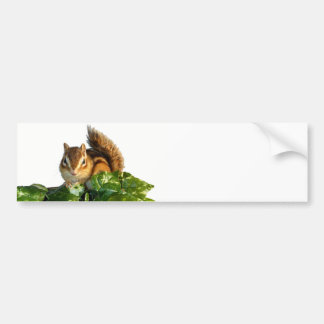 Chipmunk photo bumper sticker