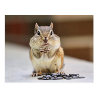 Chipmunk Picture Postcard