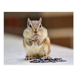 Chipmunk Picture Postcard
