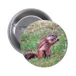 Chipmunk Pin