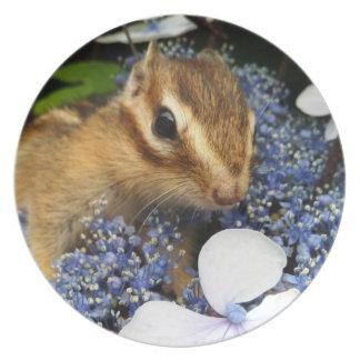 Chipmunk, placa platos