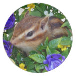 Chipmunk, placa platos de comidas