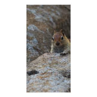Chipmunk Playing Hide And Seek Card