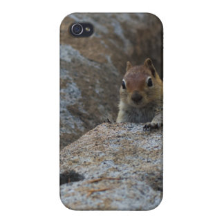 Chipmunk Playing Hide And Seek Cover For iPhone 4