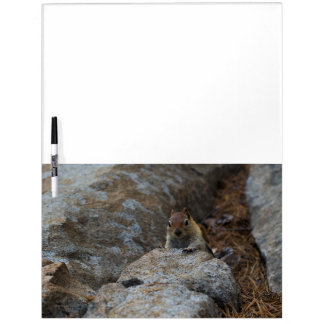 Chipmunk Playing Hide And Seek Dry-Erase Board