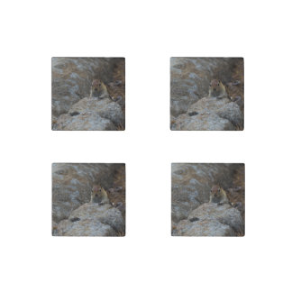 Chipmunk Playing Hide And Seek Stone Magnet
