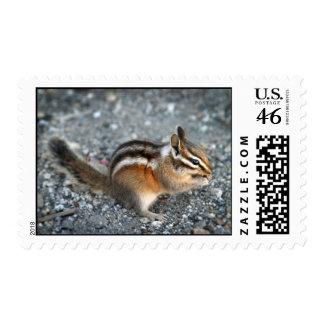 Chipmunk Stamp