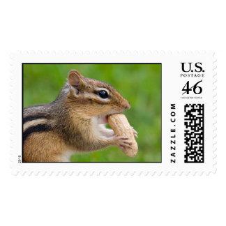Chipmunk Postage - Large