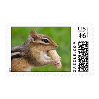 Chipmunk Postage - Medium