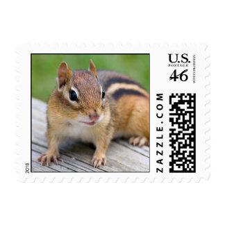 Chipmunk Postage - Small