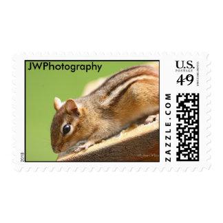 Chipmunk Postage Stamps