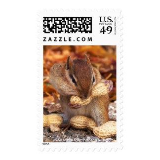 Chipmunk Postage Stamps (vertical)
