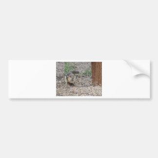 Chipmunk que alimenta en la tierra pegatina de parachoque