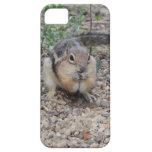 Chipmunk que alimenta en la tierra iPhone 5 cobertura