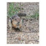 Chipmunk que alimenta en la tierra plantilla de membrete