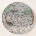 Chipmunk que alimenta en la tierra posavasos diseño