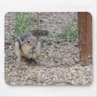 Chipmunk que alimenta en la tierra alfombrillas de raton