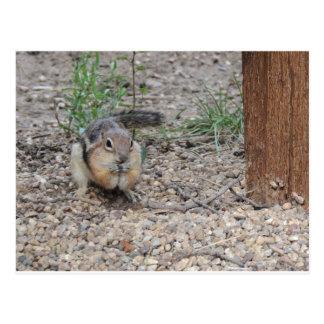 Chipmunk que alimenta en la tierra postal