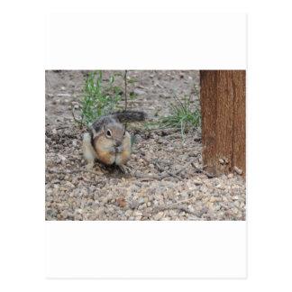 Chipmunk que alimenta en la tierra tarjeta postal