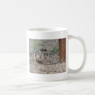 Chipmunk que alimenta en la tierra tazas