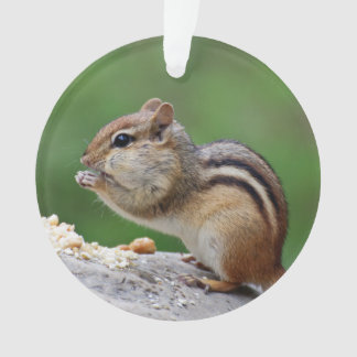 Chipmunk que come nueces