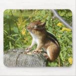 Chipmunk que empapa para arriba el Sun Mousepad Tapete De Raton