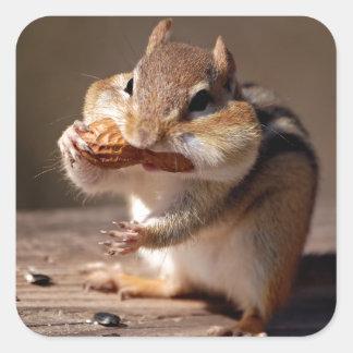 Chipmunk que rellena su cara pegatina cuadrada