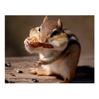 Chipmunk que rellena su cara postal