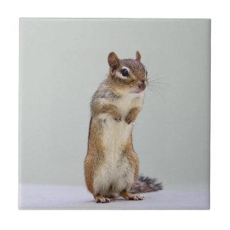 Chipmunk que se levanta la foto teja cerámica