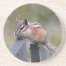 Chipmunk Sandstone Coaster