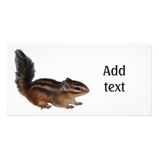 chipmunk, Squirrel and photo (31) Card