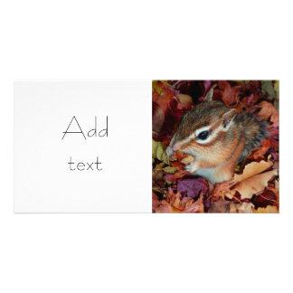 chipmunk, Squirrel and photo Card